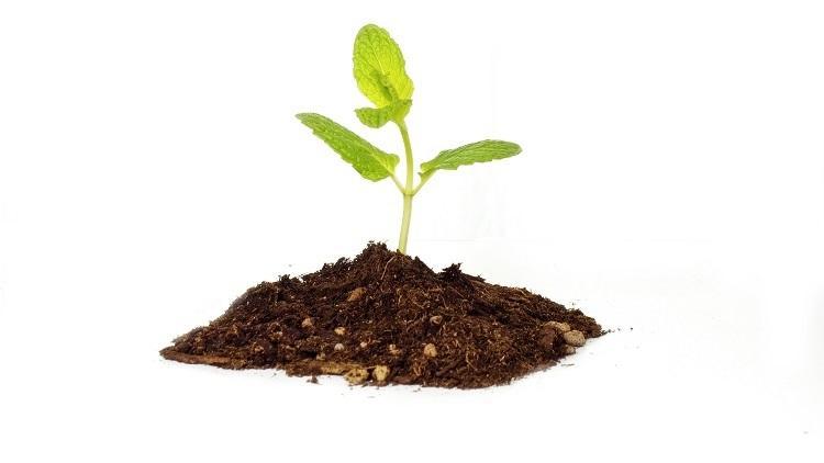 posejano_seme